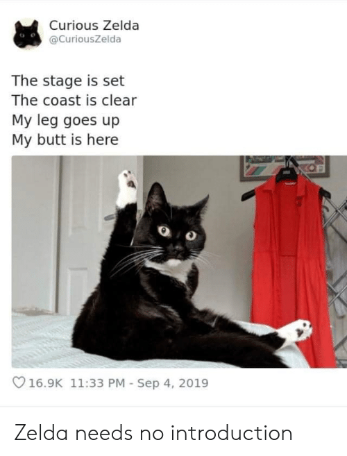 Butt, Zelda, and Set: Curious Zelda  @CuriousZelda  The stage is set  The coast is clear  My leg goes up  My butt is here  16.9K 11:33 PM Sep 4, 2019 Zelda needs no introduction