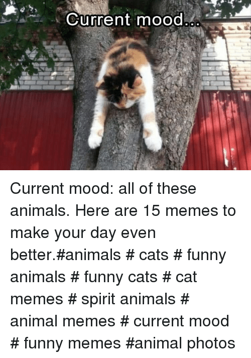 Funny animals: Current mood Current mood: all of these animals.Here are 15 memes to make your day even better.#animals # cats # funny animals # funny cats # cat memes # spirit animals # animal memes # current mood # funny memes #animal photos