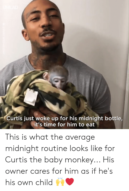 Dank, Monkey, and Time: Curtis just woke up for his midnight bottle,  it's time for him to eat This is what the average midnight routine looks like for Curtis the baby monkey... His owner cares for him as if he's his own child 🙌❤️️