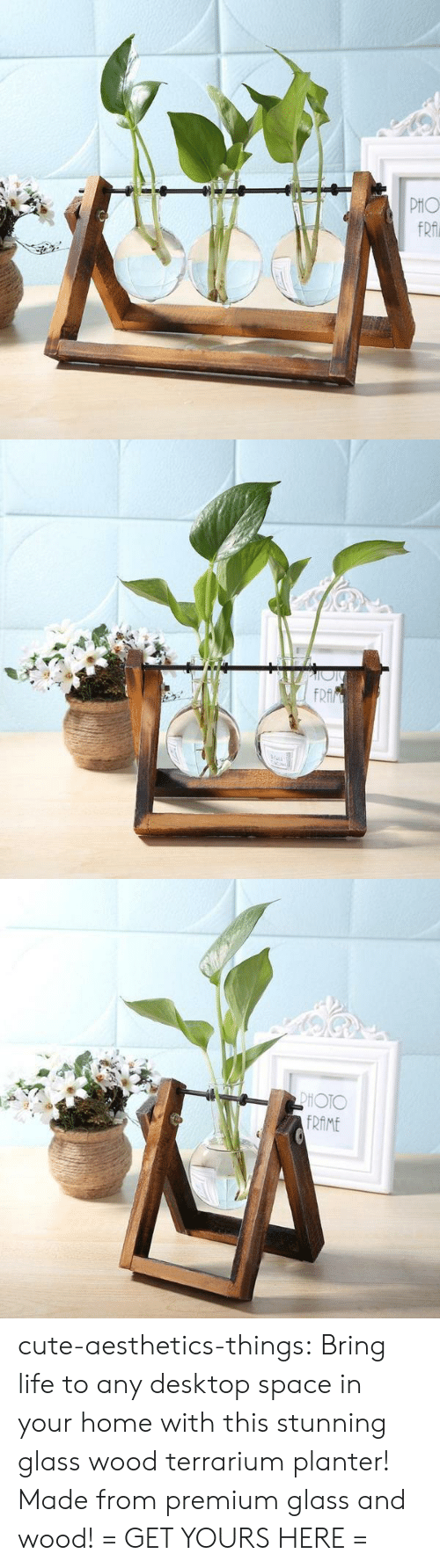 Cute, Life, and Target: cute-aesthetics-things: Bring life to any desktop space in your home with this stunning glass  wood terrarium planter! Made from premium glass and wood! = GET YOURS HERE =