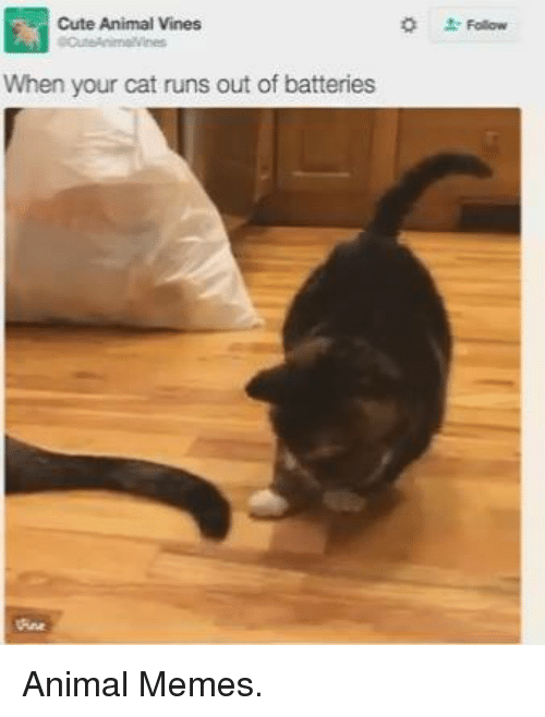 Animeds: Cute Animal Vines  When your cat runs out of batteries Animal Memes.