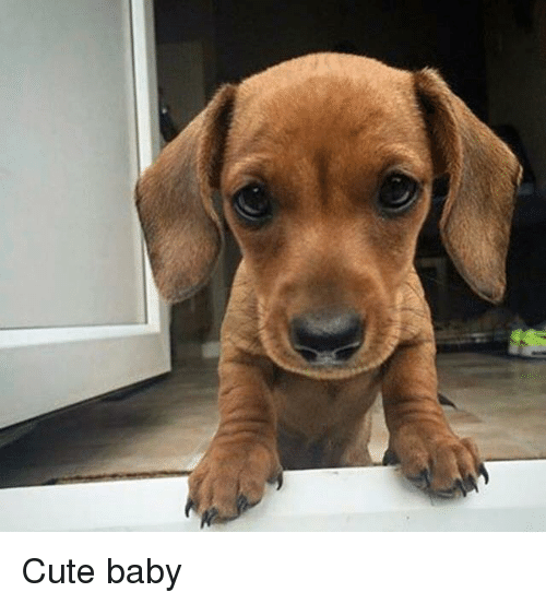 Cute, Memes, and Baby: Cute baby