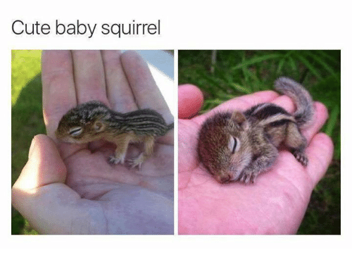 cute baby: Cute baby squirrel