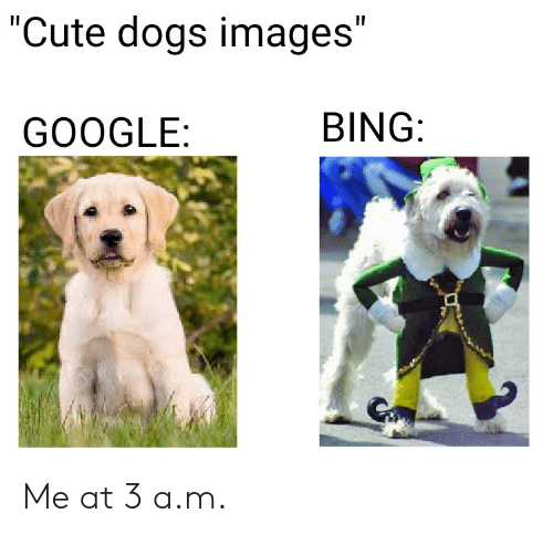 """cute dogs: """"Cute dogs images""""  BING:  GOOGLE: Me at 3 a.m."""