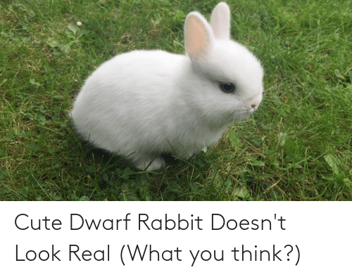 Cute, Rabbit, and Dwarf: Cute Dwarf Rabbit Doesn't Look Real (What you think?)