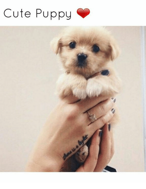 Memes, Puppies, and Puppy: Cute Puppy