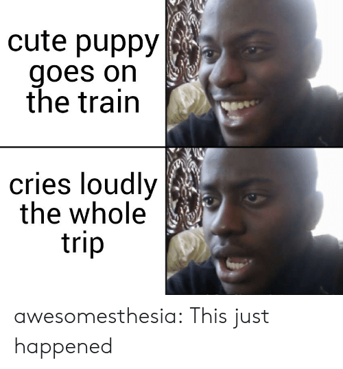 cute puppy: cute puppy  goes on  the train  cries loudly  the whole  trip awesomesthesia:  This just happened
