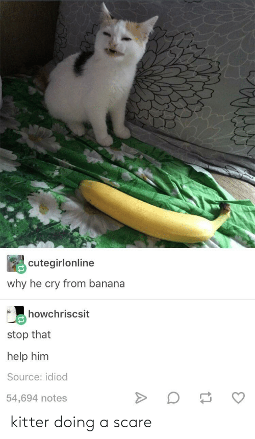 Scare, Banana, and Help: cutegirlonline  why he cry from banana  howchriscsit  stop that  help him  Source: idiod  54,694 notes kitter doing a scare