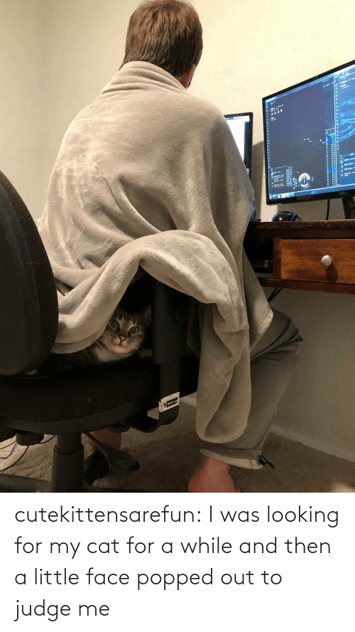 A Little: cutekittensarefun: I was looking for my cat for a while and then a little face popped out to judge me