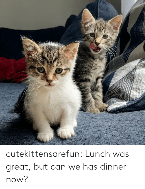 Target, Tumblr, and Blog: cutekittensarefun:  Lunch was great, but can we has dinner now?