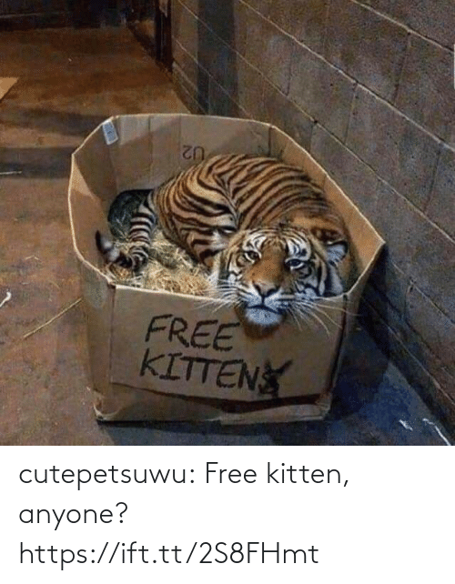 Free: cutepetsuwu:  Free kitten, anyone? https://ift.tt/2S8FHmt