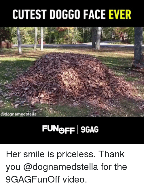 9gag, Memes, and Thank You: CUTEST DOGGO FACE  EVER  @dognamedstella  FUNoFF 9GAG Her smile is priceless. Thank you @dognamedstella for the 9GAGFunOff video.