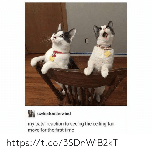 Cats, Memes, and Time: cwleafonthewind  my cats' reaction to seeing the ceiling fan  move for the first time https://t.co/3SDnWiB2kT