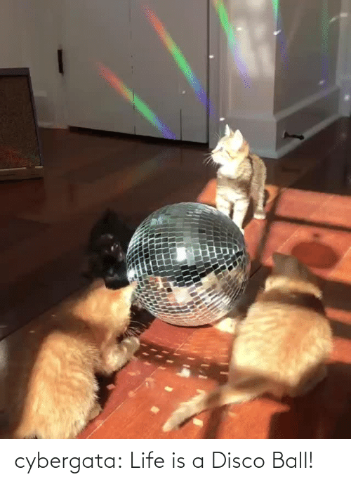 Life Is: cybergata: Life is a Disco Ball!