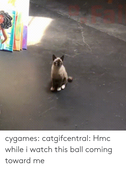 Towardly: cygames:  catgifcentral: Hmc while i watch this ball coming toward me