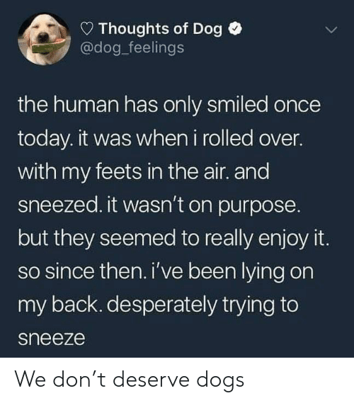 feets: D Thoughts of Dog  @dog_feelings  the human has only smiled once  today. it was when i rolled over.  with my feets in the air. and  sneezed. it wasn't on purpose.  but they seemed to really enjoy it.  so since then.i've been lying on  my back. desperately trying to  sneeze We don't deserve dogs