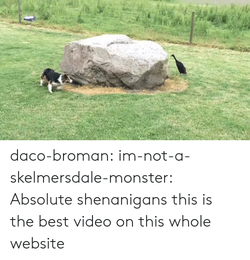 Monster, Shenanigans, and Tumblr: daco-broman: im-not-a-skelmersdale-monster:  Absolute shenanigans   this is the best video on this whole website