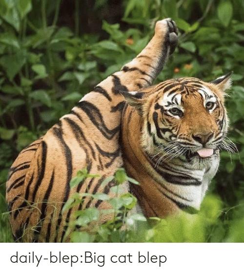 Target, Tumblr, and Blog: daily-blep:Big cat blep