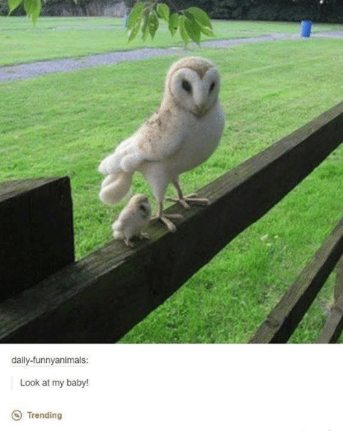 Funny Animated: daily-funny animals:  Look at my baby!  Trending