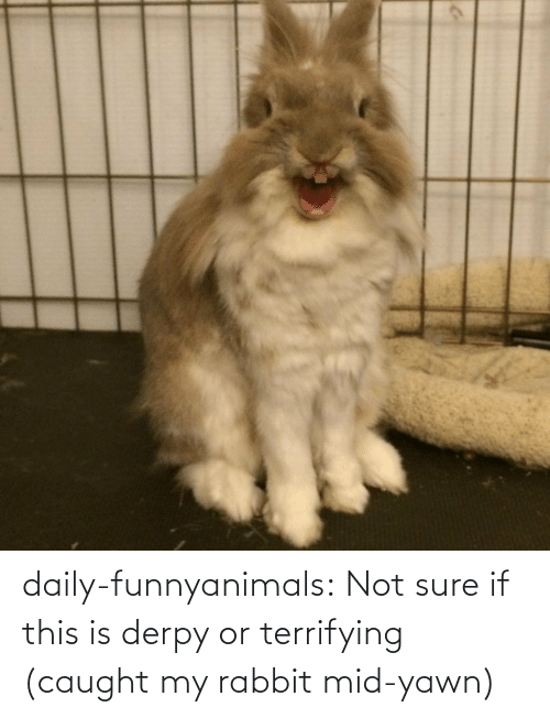 Caught My: daily-funnyanimals:  Not sure if this is derpy or terrifying (caught my rabbit mid-yawn)