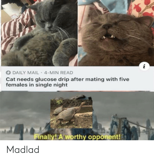 Daily Mail, Mail, and Single: DAILY MAIL- 4-MIN READ  Cat needs glucose drip after mating with five  females in single night  Finally! A worthy opponent! Madlad