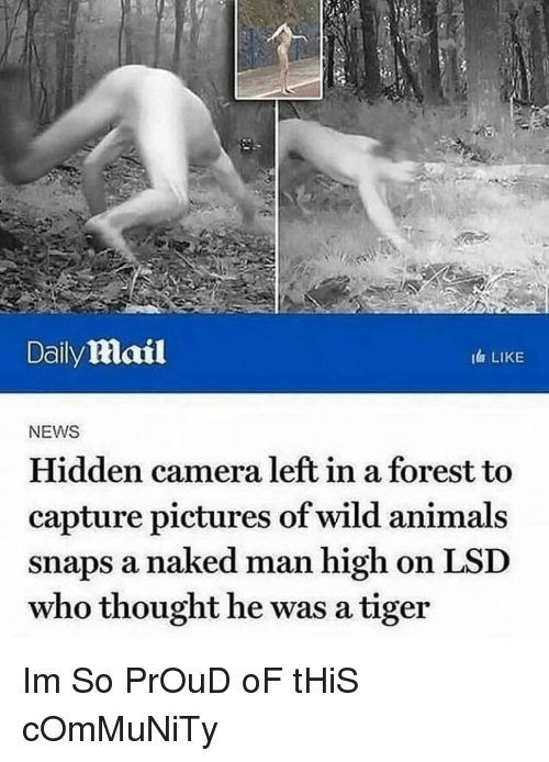 lsd: Daily mail  I LIKE  NEWS  Hidden camera left in a forest to  capture pictures of wild animals  snaps a naked man high on LSD  who thought he was a tiger Im So PrOuD oF tHiS cOmMuNiTy
