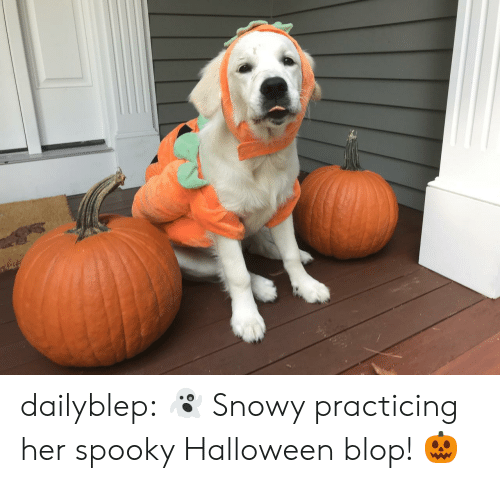 practicing: dailyblep:  👻 Snowy practicing her spooky Halloween blop! 🎃