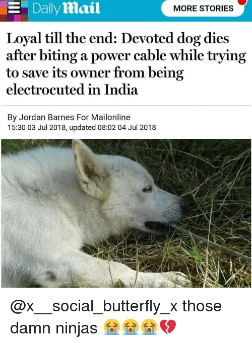 Memes, Butterfly, and India: Dailymail  MORE STORIES  Loyal till the end: Devoted dog dies  after biting a power cable while tryıng  to save its owner from being  electrocuted in India  By Jordan Barnes For Mailonline  15:30 03 Jul 2018, updated 08:02 04 Jul 2018 @x__social_butterfly_x those damn ninjas 😭😭😭💔
