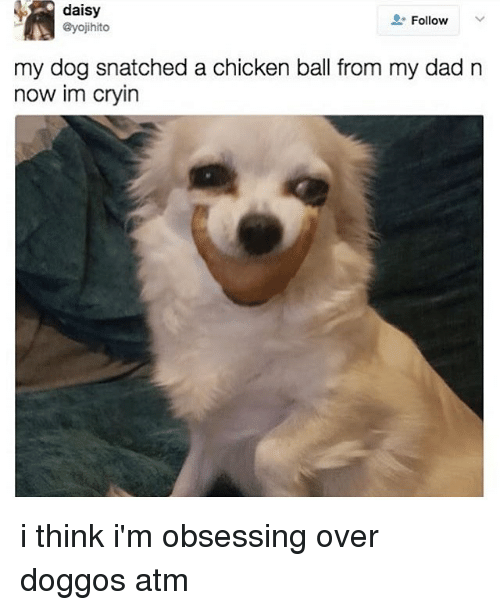♂: daisy  @yojihito  Follow  my dog snatched a chicken ball from my dad n  now im cryin i think i'm obsessing over doggos atm