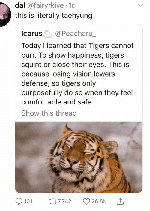 purr: dal @fairyrkive 1d  this is literally taehyung  Icarus @Peacharu  Today I learned that Tigers cannot  purr. To show happiness, tigers  squint or close their eyes. This is  because losing vision lowers  defense, so tigers only  purposefully do so when they feel  comfortable and safe  Show this thread  101 7742 26.8K