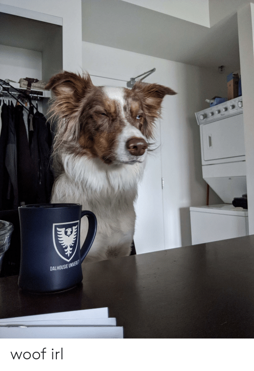 Irl, Dog IRL, and Dalhousie: DALHOUSIE UNIVERSIT woof irl