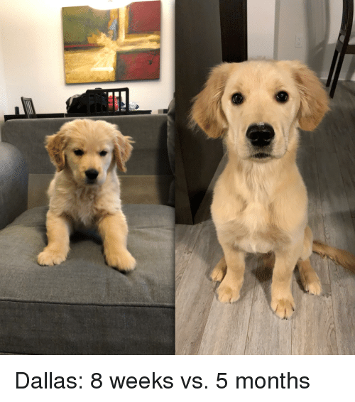 Dallas, Months, and Weeks
