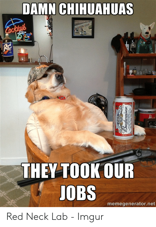 DAMN CHIHUAHUAS Cocktails THEY TOOK OUR JOBS Memegeneratornet