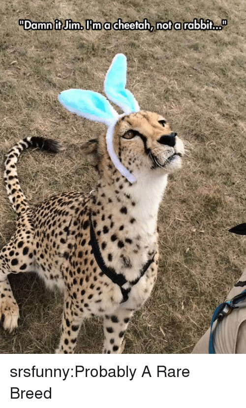 Tumblr, Blog, and Http: Damn it Jim,lrmacheetah, not a rabbit... srsfunny:Probably A Rare Breed