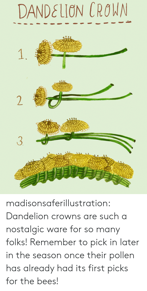Crowns: DANDELION CROWN  1.  2  3 madisonsaferillustration: Dandelion crowns are such a nostalgic ware for so many folks! Remember to pick in later in the season once their pollen has already had its first picks for the bees!