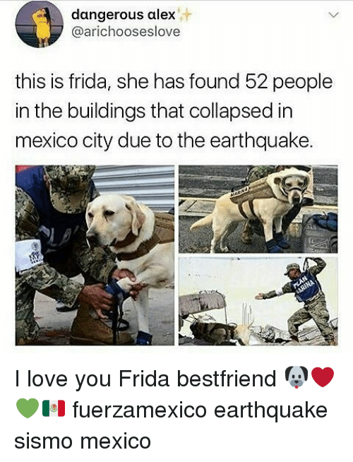 Love, Memes, and I Love You: dangerous alex  @arichooseslove  this is frida, she has found 52 people  in the buildings that collapsed in  mexico city due to the earthquake. I love you Frida bestfriend 🐶❤💚🇲🇽 fuerzamexico earthquake sismo mexico