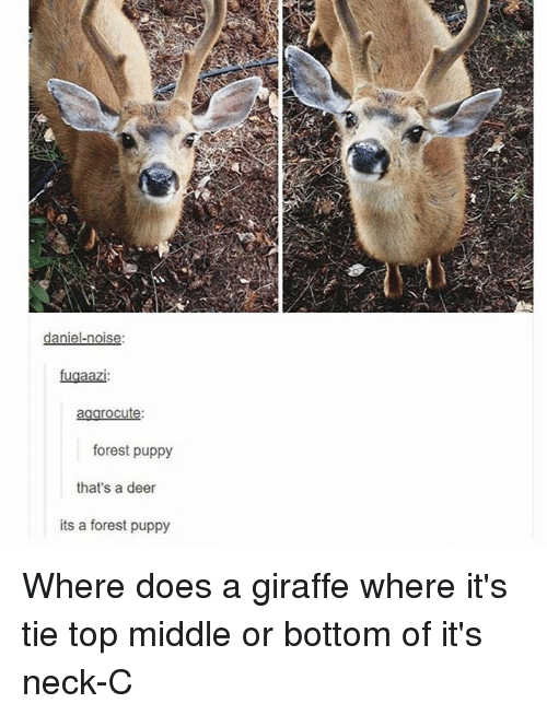 Deer, Memes, and Giraffe: daniel-noise  fuaaazi  agarocute  forest puppy  that's a deer  its a forest puppy Where does a giraffe where it's tie top middle or bottom of it's neck-C