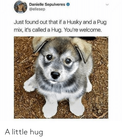 pug: Danielle Sepulveres  @ellesep  Just found out that if a Husky and a Pug  mix, it's called a Hug. You're welcome. A little hug