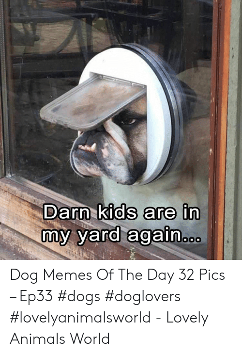 Animals, Dogs, and Memes: Darn kids are in  my yard again Dog Memes Of The Day 32 Pics – Ep33 #dogs #doglovers #lovelyanimalsworld - Lovely Animals World