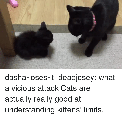 Vicious: dasha-loses-it: deadjosey: what a vicious attack  Cats are actually really good at understanding kittens' limits.