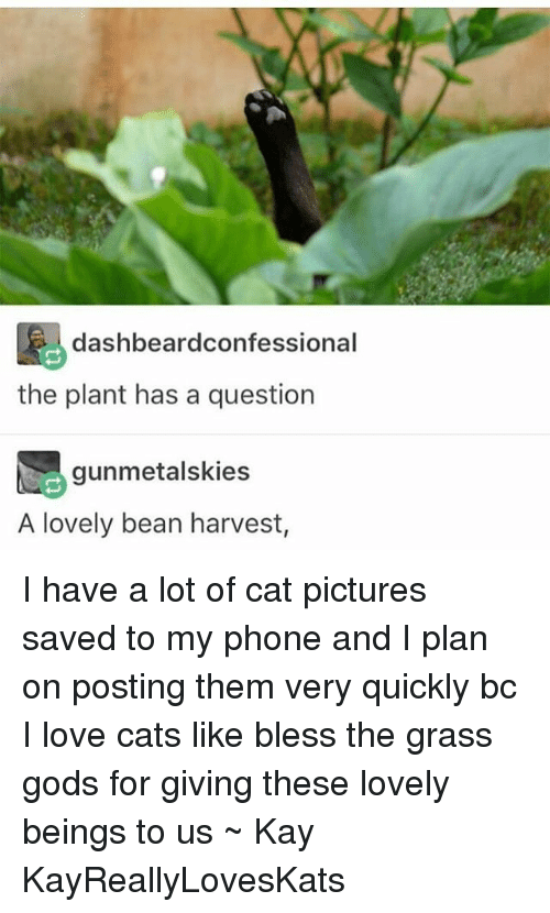 Tumblr, Grass, and Bean: dashbeardconfessional  the plant has a question  gunmetalskies  A lovely bean harvest, I have a lot of cat pictures saved to my phone and I plan on posting them very quickly bc I love cats like bless the grass gods for giving these lovely beings to us ~ Kay KayReallyLovesKats