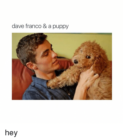 Puppies, Puppy, and Girl Memes: dave franco & a puppy hey
