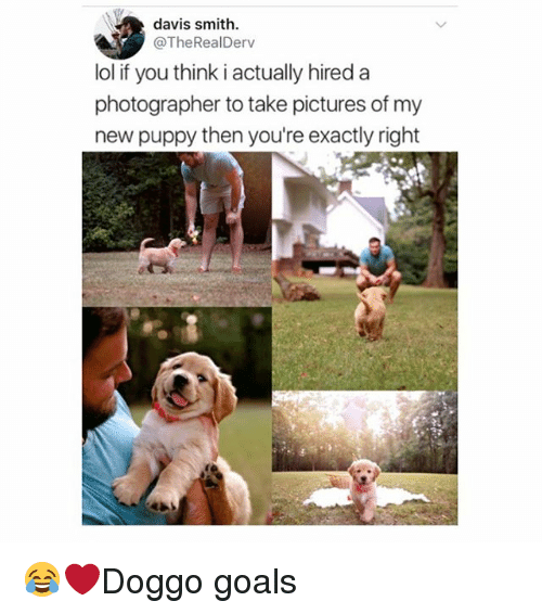 Goals, Lol, and Memes: davis smith.  @TheRealDerv  lol if you think i actually hired a  photographer to take pictures of my  new puppy then you're exactly right 😂❤️Doggo goals