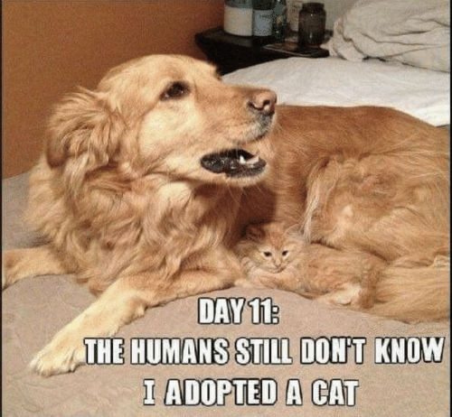 Cat, Day, and Still: DAY 11  THE HUMANS STILL DONT KNOW  I ADOPTED A CAT