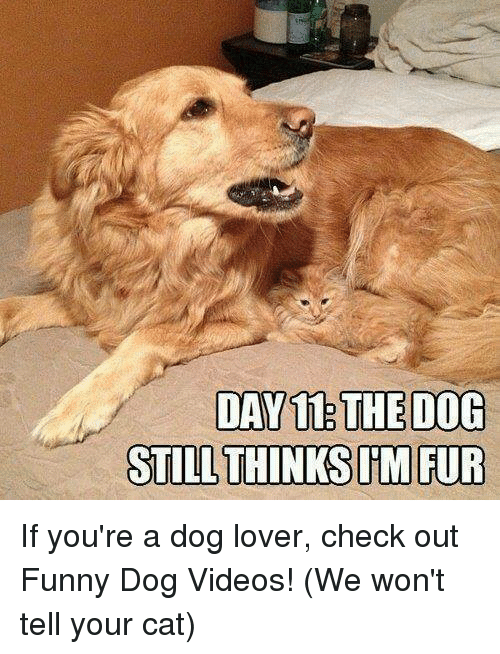 Memes, Videos, and Video: DAY 11:THEDOG  STILL THINKS TM FUR If you're a dog lover, check out Funny Dog Videos! (We won't tell your cat)