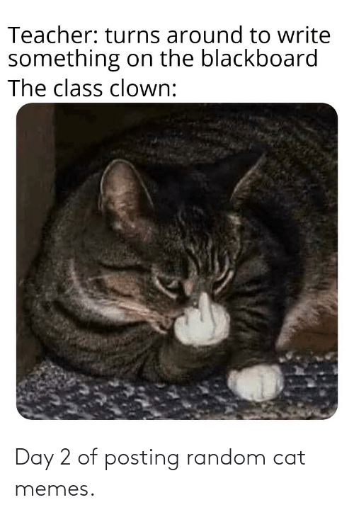 random: Day 2 of posting random cat memes.