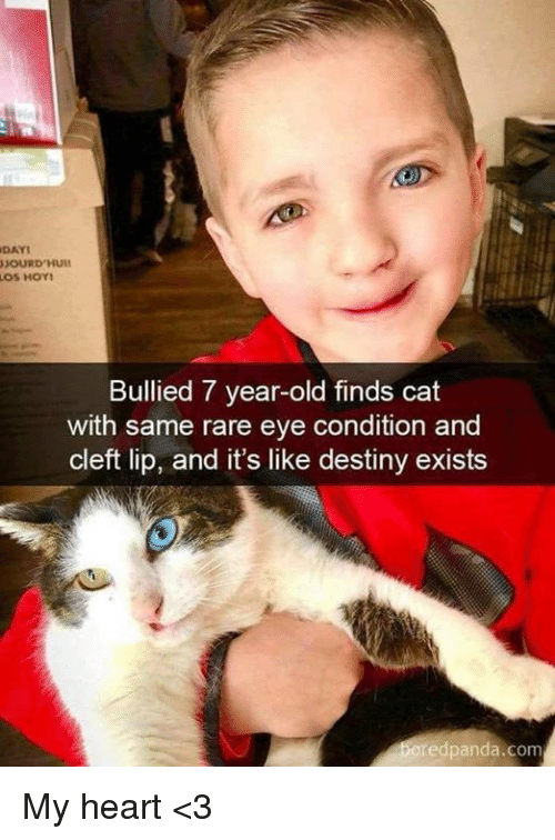 Destiny, Memes, and Heart: DAY  Bullied 7 year-old finds cat  with same rare eye condition and  cleft lip, and it's like destiny exists  edpanda.com My heart <3