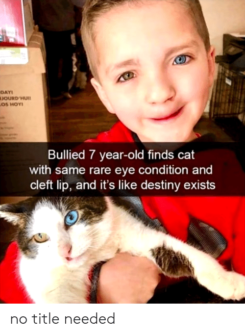 Destiny, Old, and Cat: DAY  JOURD'HUI  LOS HOY!  Bullied 7 year-old finds cat  with same rare eye condition and  cleft lip, and it's like destiny exists no title needed