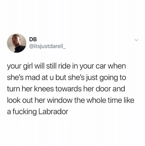 labrador: DB  @itsjustdarell  your girl will still ride in your car when  she's mad at u but she's just going to  turn her knees towards her door and  look out her window the whole time like  a fucking Labrador