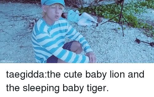 cute baby: dda taegidda:the cute baby lion and the sleeping baby tiger.